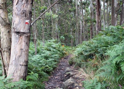 Camino entre el bosque.
