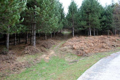 El bosque nos 'traga', pero solo durante 150 metros.