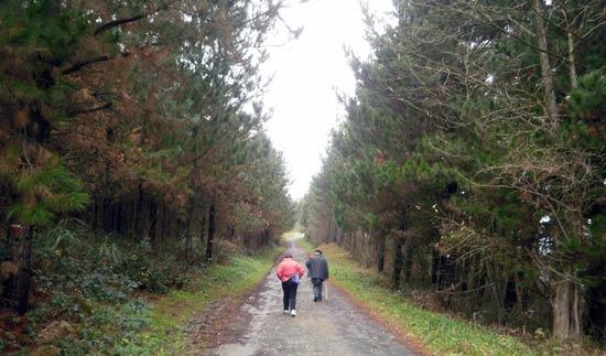 Un paseo por el monte, lo mejor contra la artritis.