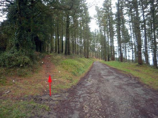 Por este camino, en un tris te plantas en la cima.