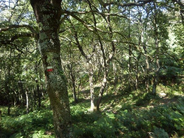 El bandido Fendetestas animaría mucho este bosque.