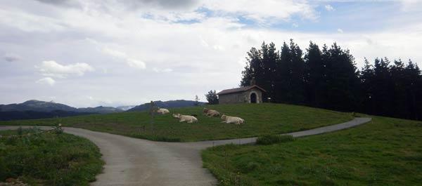 """Estas vacas sí podrán decir aquello de """"El Señor es mi pastor""""."""