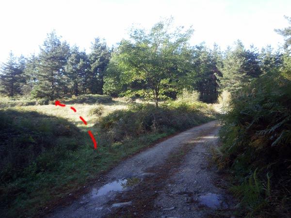 Por el sendero entre los pinos, descender a Lamindao está chupao.