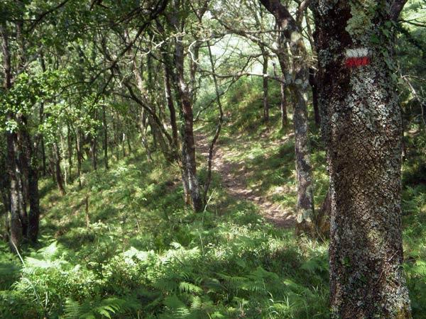 Baja el ritmo y disfruta de la tranquilidad del bosque.