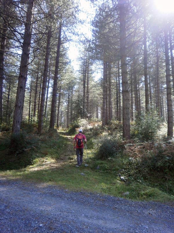 Y nos adentramos en el bosque. Ya poco queda hasta los merenderos.