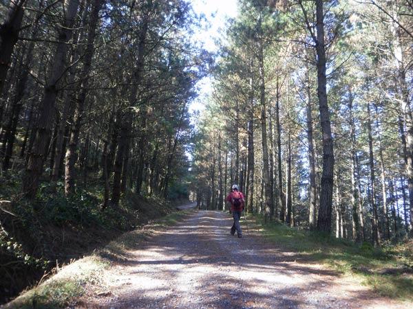 Buena pista, buenos pinos y escasa pendiente. Buen ocasión para quitar algo de atención a la ruta y dedicarla al entorno.