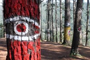 Árboles pintados en el Bosque de Oma, obra de Agustín Ibarrola.
