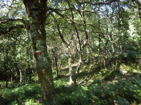 Incluso en la espesura del bosque la señalización de perfecta.