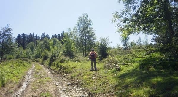 Tomamos el sendero herboso camino del pinar.