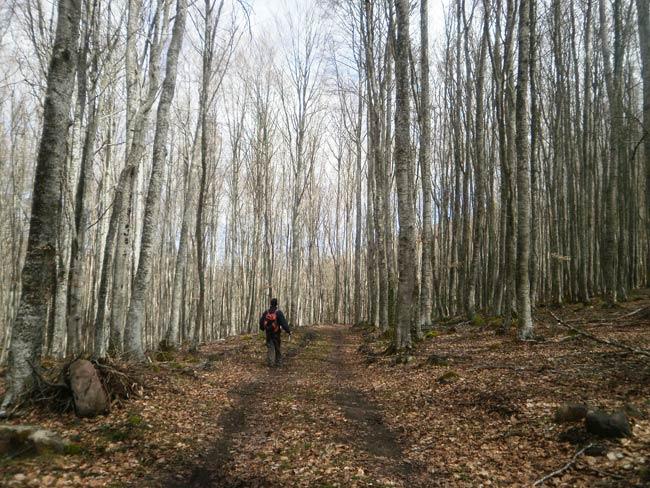 Árboles y más árboles. La verdad es que este bosque tiene su encanto.