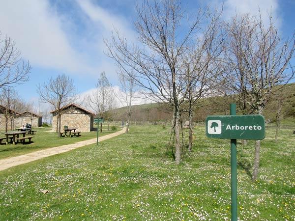 Arboreto: campa primaveral, árboles invernales.
