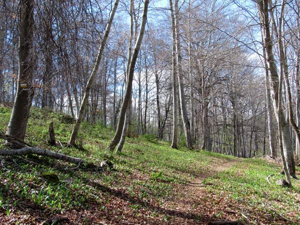 Bonito bosque.