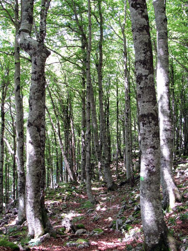 Entramos de nuevo en el bosque, al abrigo de la sombra